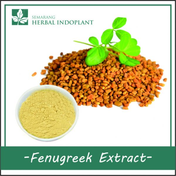 FENUGREEK-POWDER-EXTRACT