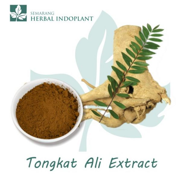 Factory-Direct-Supply-Natural-Herbal-Plant-Tongkat