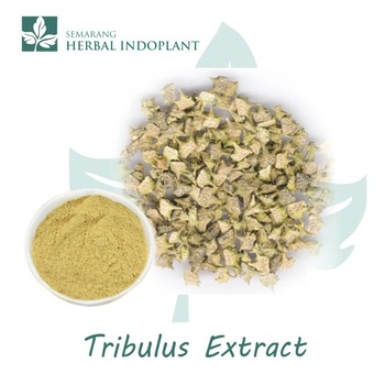 Factory-Direct-Supply-Natural-Herbal-Plant-Tribulus.jpg_350x350
